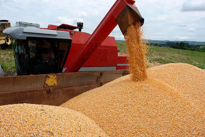 Milho segunda safra: colheita no Centro-Sul alcança 9,5% da área