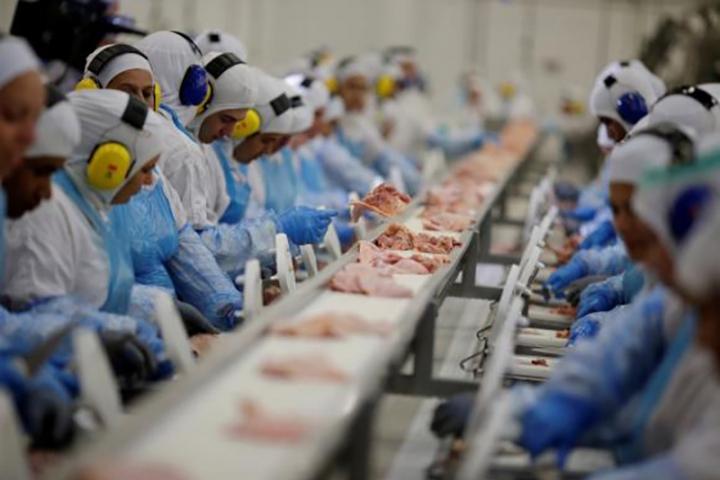 Frango: exportação de carne sobe quase 4% no segundo semestre