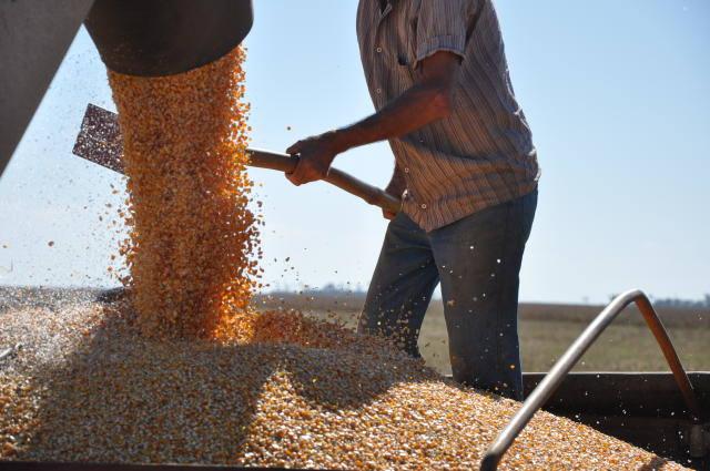Plantio da segunda safra de milho atinge 15% no Centro-Sul