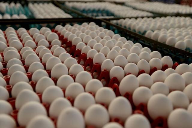 Ovos: preços atingem o maior patamar desde junho de 2018