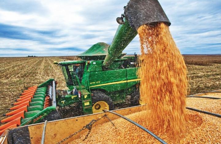 Preço do milho no mercado interno cai mais de 8% em março