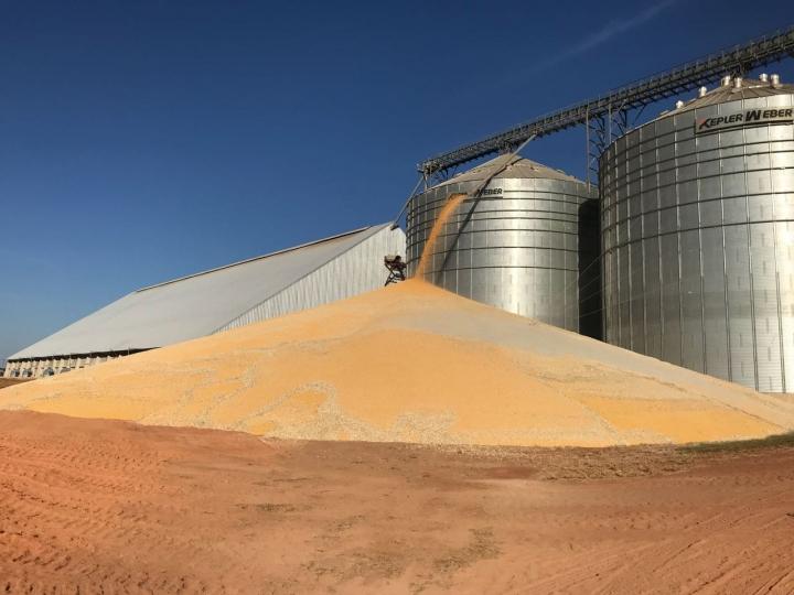 Milho: produção brasileira deve crescer mais de 24%