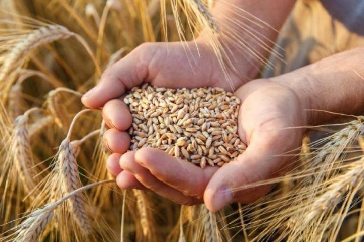 Para reduzir dependência de milho, SC quer estimular produção de outros cereais