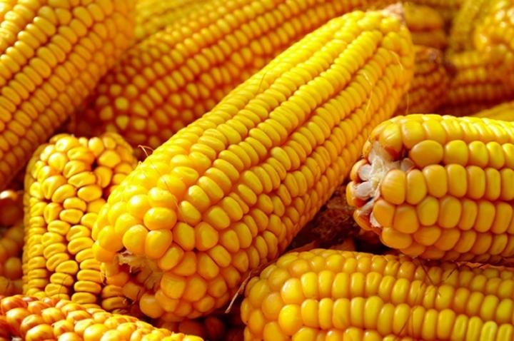 Produtores de milho e soja se animam com preços em alta e exportações