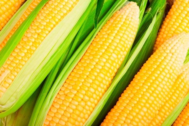 Colheita da 2ª safra de milho atinge 67% da área no centro-sul