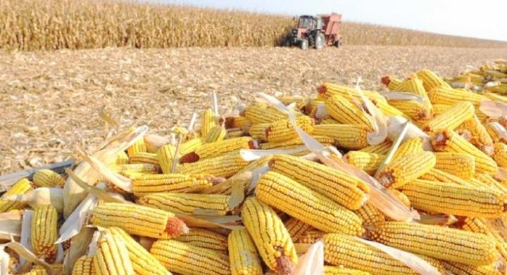 Exportações brasileiras de milho batem recorde histórico em julho