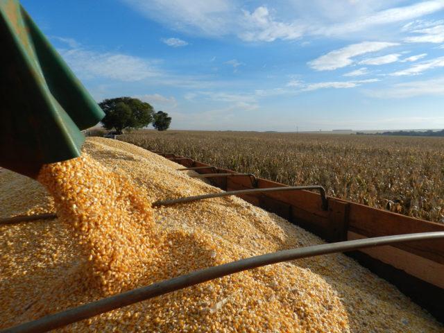 Em dois anos, milho subiu até 136% em Mato Grosso