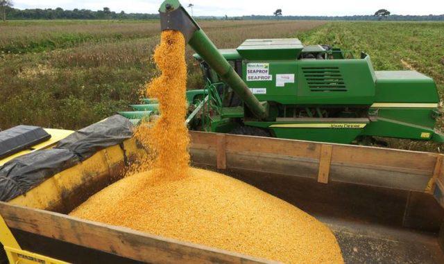 Milho: colheita da safrinha é tardia, mas produção deve surpreender