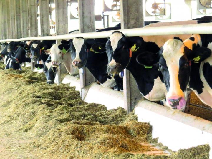 Em MG, produtores se unem e conseguem R$ 1,55 por litro de leite