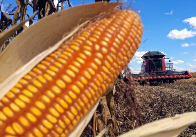 Clima e preços favoráveis aceleram plantio do milho