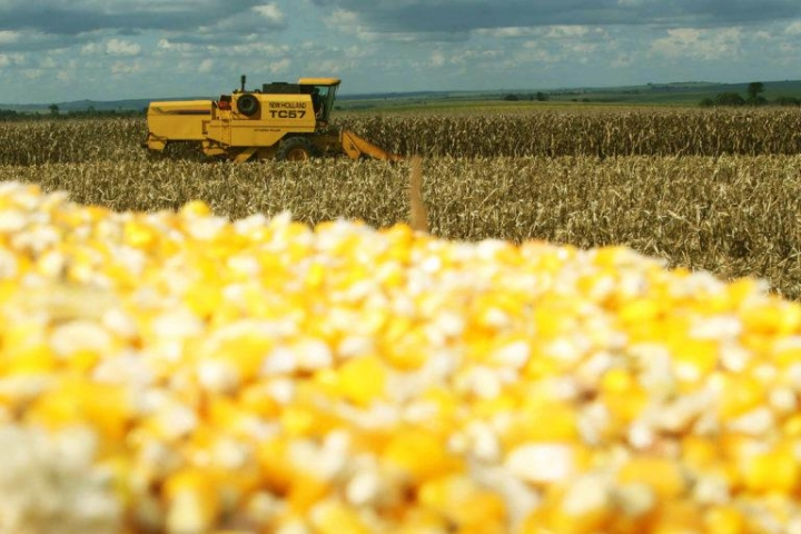 Milho: produtores retêm oferta diante da preocupação com o atraso das chuvas
