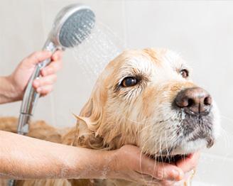Higiene para Pets